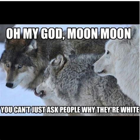 Moon Moon Meme - 81 best moon moon images on pinterest