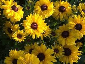 Winterpflanzen Für Balkonkästen : pflanzen f r schmetterlinge wildblumenmischung f r schmetterlinge samen und zwiebeln pflanzen ~ Indierocktalk.com Haus und Dekorationen