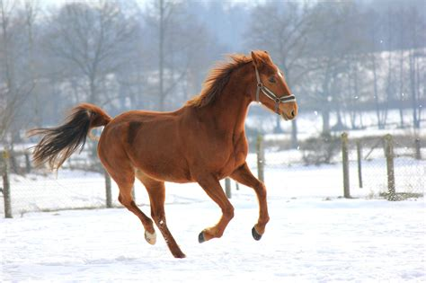 horse winter care