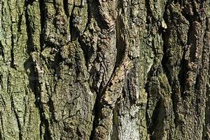 Texture of weathered and old tree bark