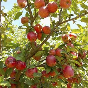 Arbres Fruitiers Nains En Pleine Terre : quels arbres fruitiers tailler en avril ~ Premium-room.com Idées de Décoration