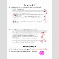 Microsoft Word  Cycles Worksheetdoc