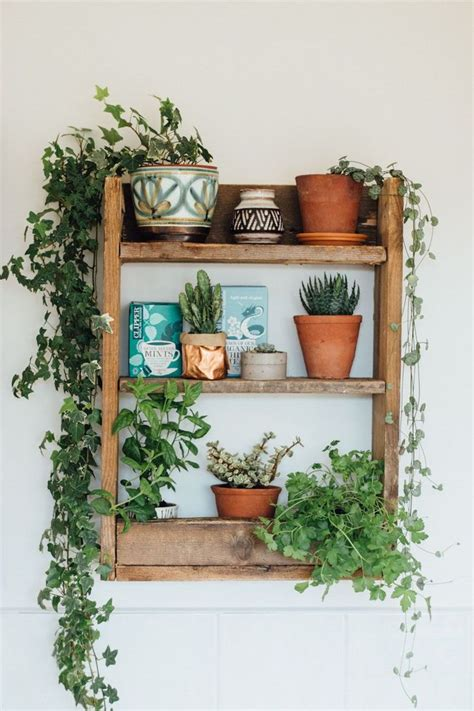 Decorating Ideas For Kitchen Plant Shelves by 17 Best Ideas About House Plants On Plants