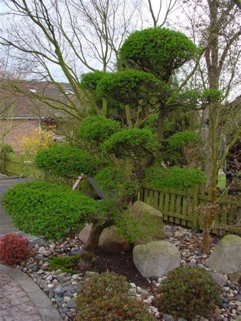Japanischer Garten Kiefer by Japanischer Garten Baumgestaltung