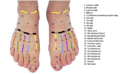 anatomy   dorsal aspect   foot myfootshopcom
