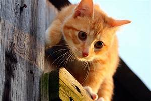 Free Picture  Cat  Cute  Animal  Young  Kitten  Feline