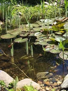 Goldfische Im Teich : gartenteich ~ Eleganceandgraceweddings.com Haus und Dekorationen