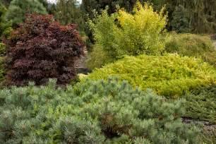 evergreen border shrubs buchholz buchholz form and foliage