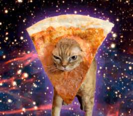cat pizza caterville pizza cat gifs