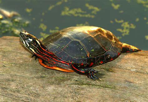 global warming turtles  coral reef fish biology