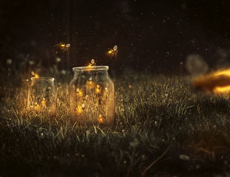 create  glowing fireflies photo manipulation