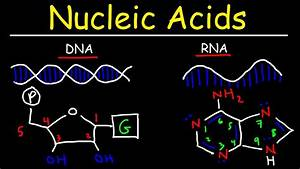 Nucleic Acids - Rna And Dna Structure - Biochemistry