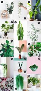 Eucalyptus Plante D Intérieur : mes plantes vertes pr f r es mango and salt ~ Melissatoandfro.com Idées de Décoration