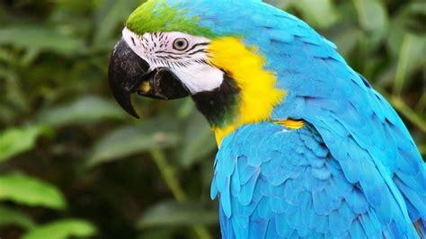 Macaw Parrot Desktop Picture Parrot Bird Download ...
