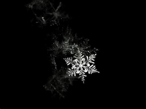 Snowflake Background Black And White by Black And White Snow Wallpaper Wallpapersafari