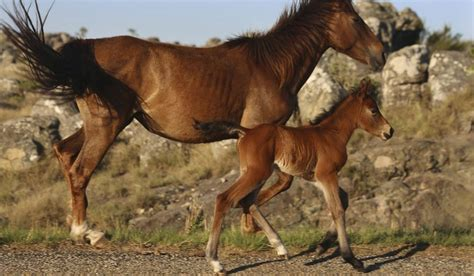 wild horses south africa african draw mining village town