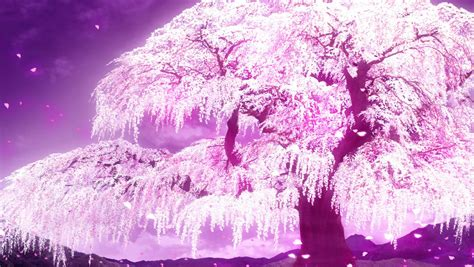 Tree Anime Wallpaper - anime cherry blossom wallpaper wallpapersafari