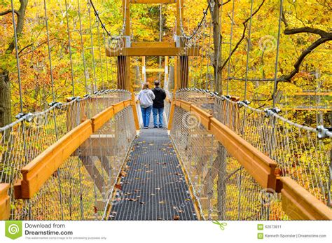forest canopy walk editorial photo image  experience