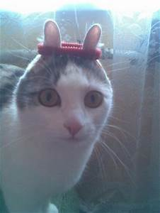 Funniest cat picture EVER! | Silly Kitties | Pinterest