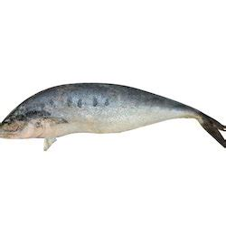 freshwater fishes freshwater fish suppliers