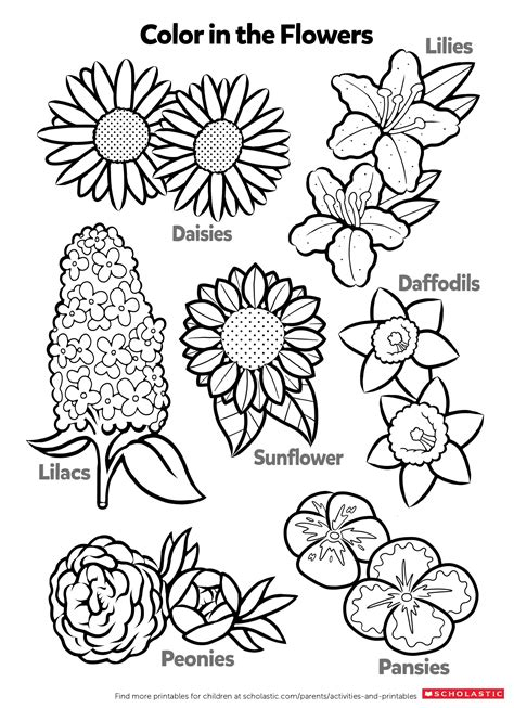 learn  flowers  coloring worksheets printables scholastic parents