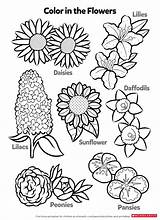 Worksheets Printable Coloring Activity Flowers Pages Printables Learn Activities Pdf Scholastic Parents Age Info sketch template