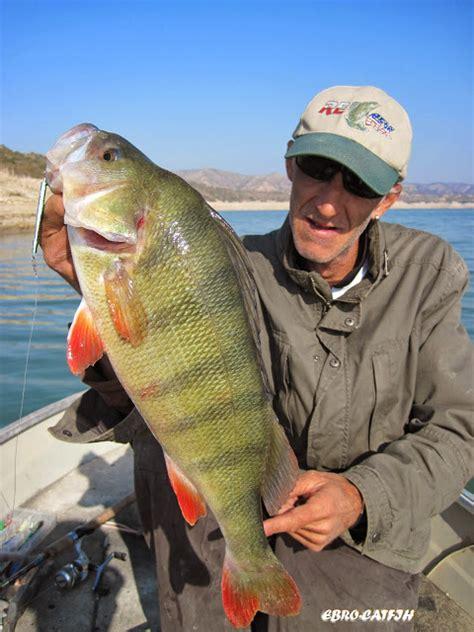 catfish fishing guide   river ebro catfishing