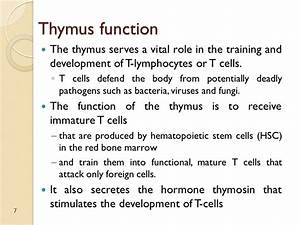 Thymus Function – applecool.info
