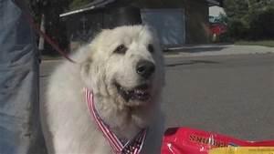 cormorant minnesota elects dog as mayor over human candidate