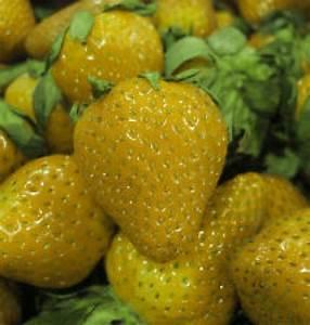 Gelbe Winterharte Pflanzen : gelbe erdbeeren neue sorte gelbe erdbeeren hoher ertrag und sehr schmackhafte erdbeeren ~ Markanthonyermac.com Haus und Dekorationen