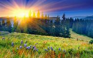 Spring Flowers Mountain Sunrise