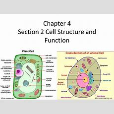 Chapter 4 Section 2 Cell Structure And Function  Ppt Video Online Download