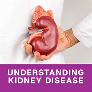 Causes And Stages Of Kidney Disease