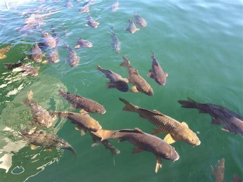 big  fish dreams meaning  interpretation