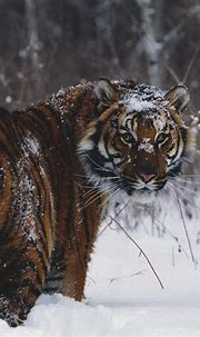 Pin by Sepultura on Power of big cats   Animals beautiful ...