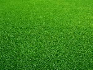 DM's Landscape & Lawn Care Maintenance: Goose Creek, SC
