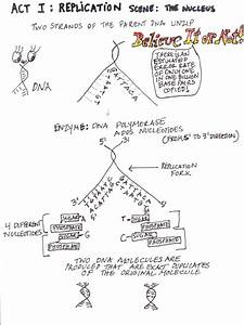 Protein Synthesis Overview Diagram  U2014 Untpikapps