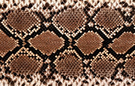 Animal Skin Wallpaper - serpiente esme escuela moda