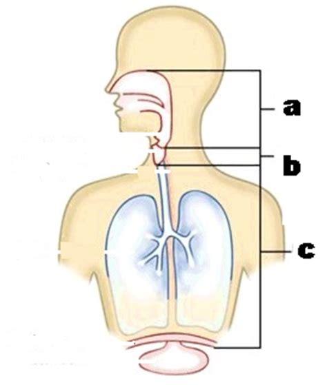 vocal anatomy test proprofs quiz