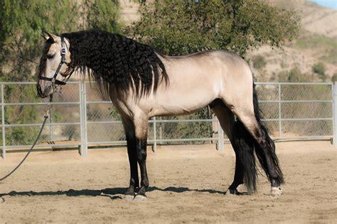 horses don contact