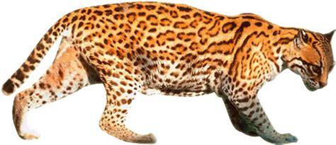 Wild Cat Clip Art