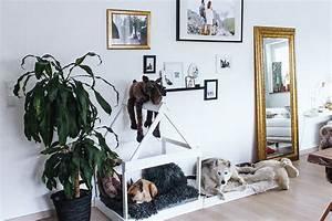 Hundehaus Für Die Wohnung : diy hundeh tte f r die wohnung selber bauen einfache diy deko ideen hundeh tte selber ~ Buech-reservation.com Haus und Dekorationen