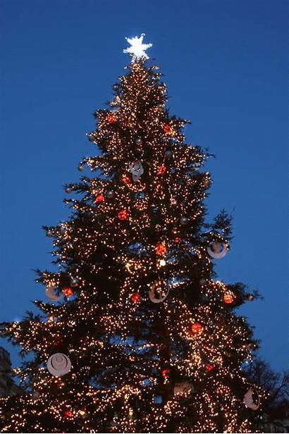 Tree Christmas Animated Xmas Lowgif Lovethispic