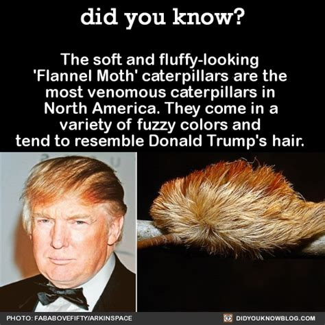 Trump Hair Memes - did you kno really tho see too easy could ve made so many more who wore it better source