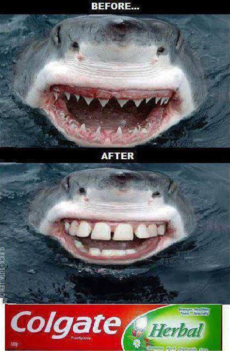 Toothpaste Meme - funny shark toothpaste ad from colgate sharkweek kanawha city pediatric dentistry