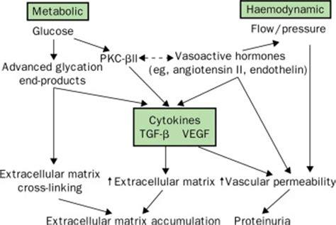 pathogenesis prevention  treatment  diabetic