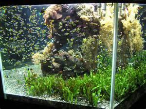 designer aquarien amazing fish tanks choosing the right fish tank for you
