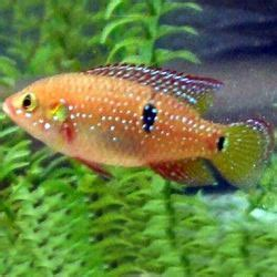 ornamental fish suppliers manufacturers traders  india