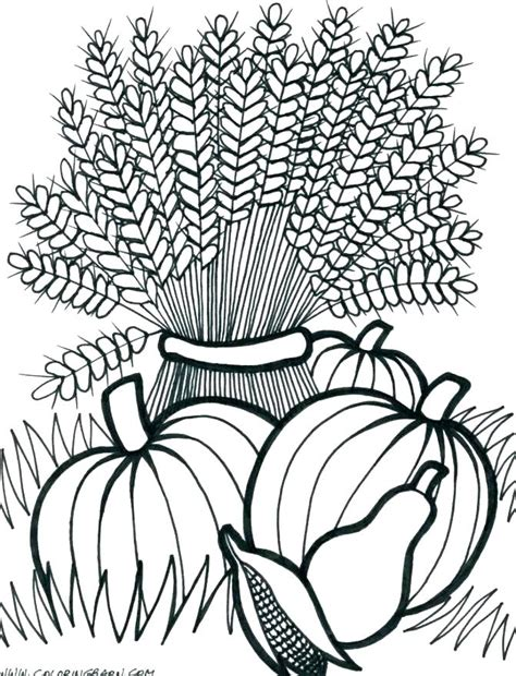 harvest vegetables coloring pages rescuefriendsinfo