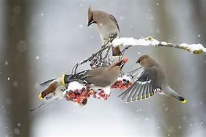 What Winter Birds Eat - Good Winter Foods